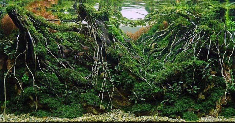 Elegir un sustrato para el acuario plantado