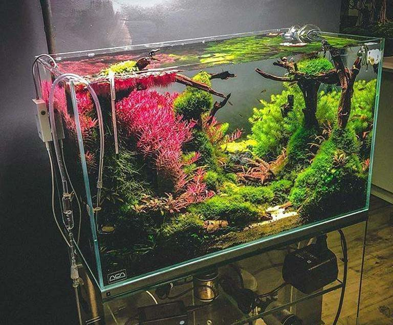 Añadir peces al acuario plantado