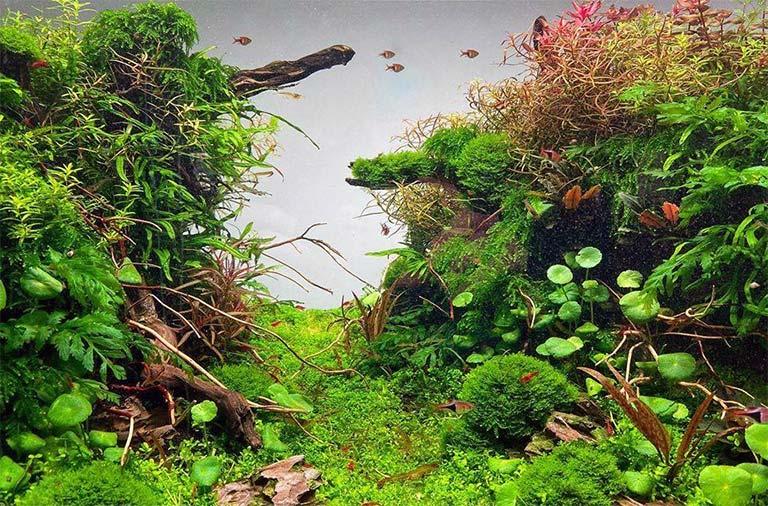 Añadir las plantas a tu acuario plantado