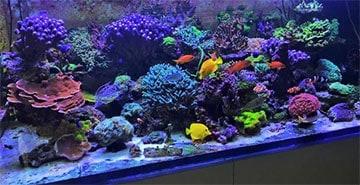 Tanque arrecife de coral