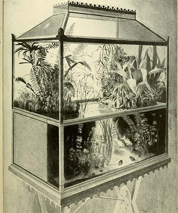 """The modern term """"aquarium"""""""
