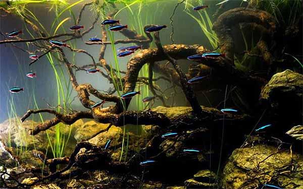 South American habitats