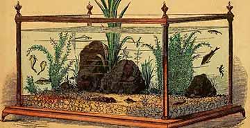 The Aquarium History: the beginning of the aquarium hobby