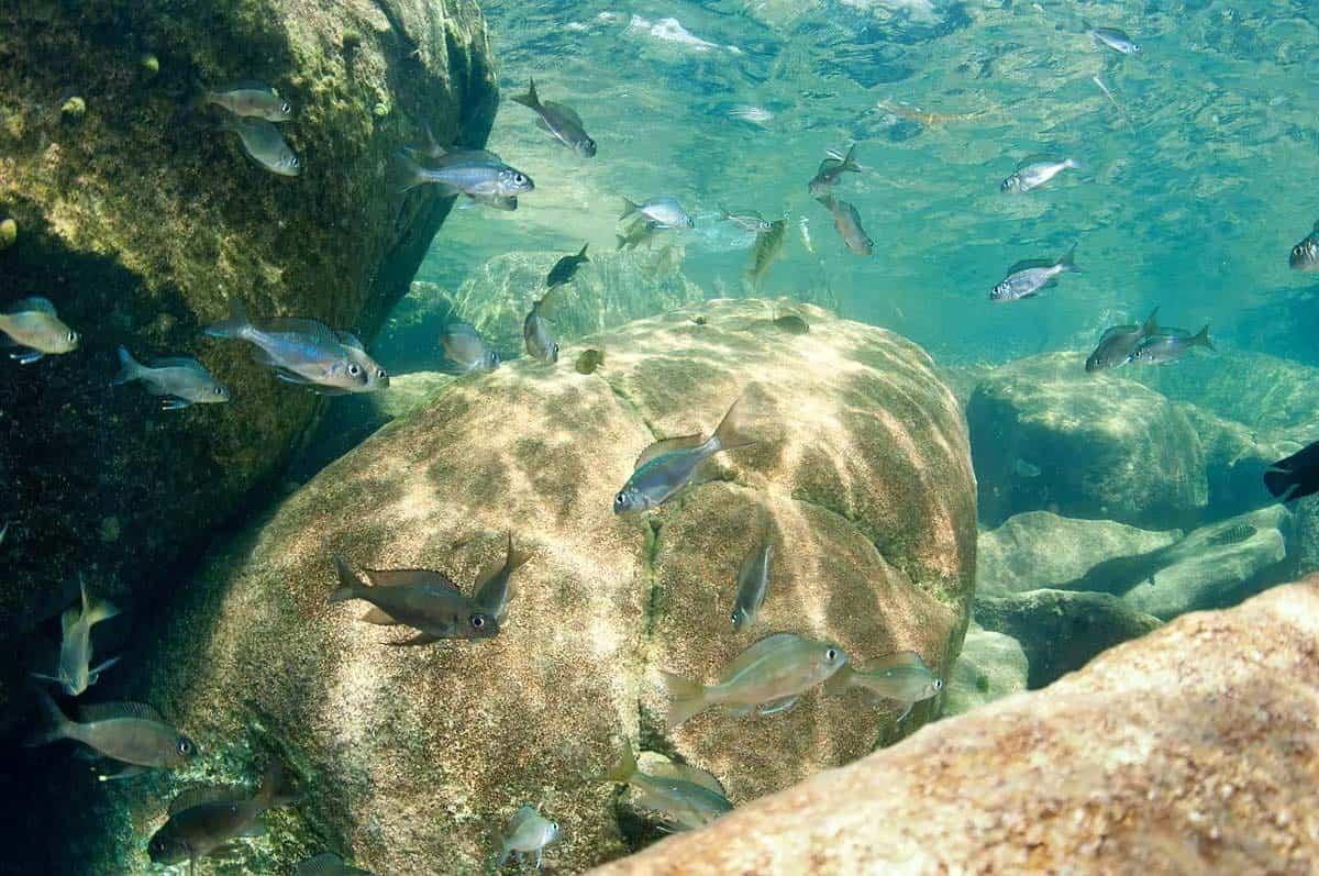 Africa – Lake Tanganyika