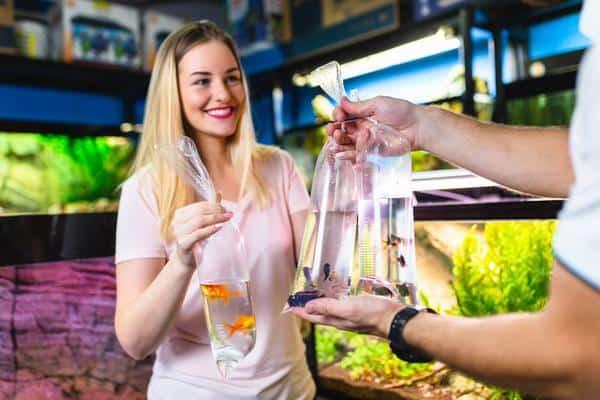 Cómo criar peces de acuario para ganar dinero