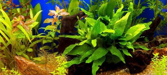 Plantas de acuario vivas