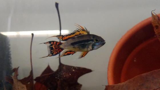 Un pez nadando en un nanoacuario