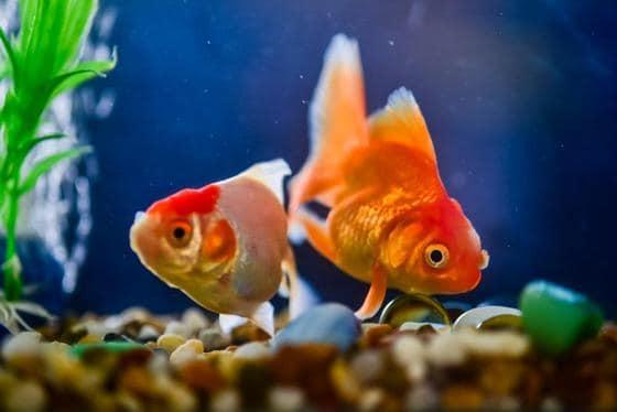 Ciclado en peceras de agua dulce: cómo prepararse para peces nuevos