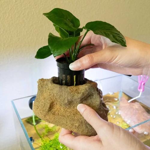 Jardinera Easy con anubias