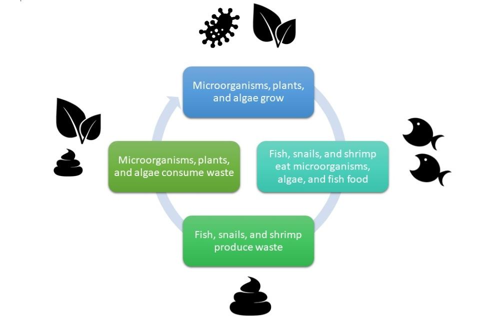 Ciclo del nitrógeno del acuario