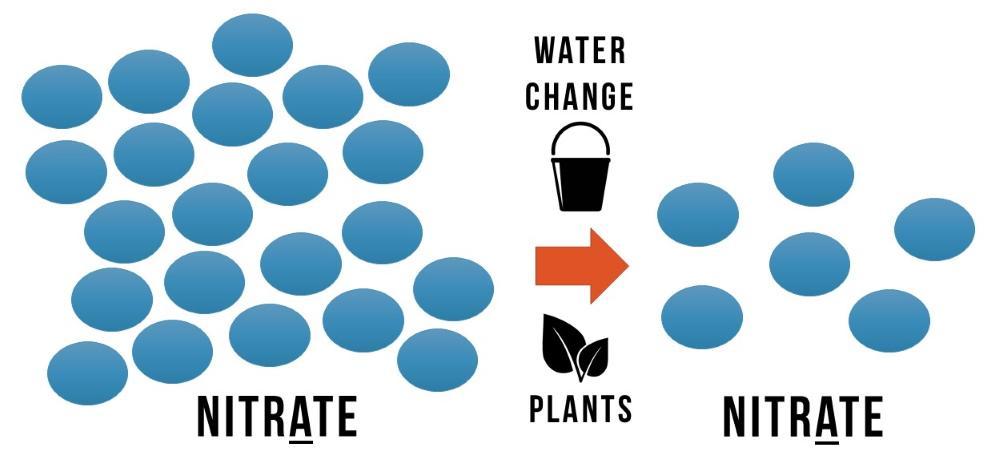 Debes eliminar los nitratos ya sea haciendo un cambio de agua o usando plantas de acuario