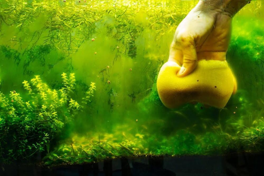limpiando las algas