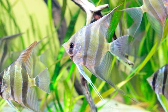 La guía fácil sobre el ciclo del nitrógeno para acuarios