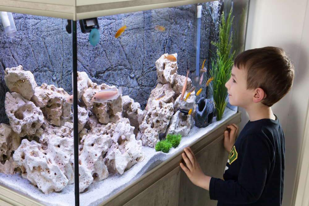 niño disfrutando del tanque de cíclidos