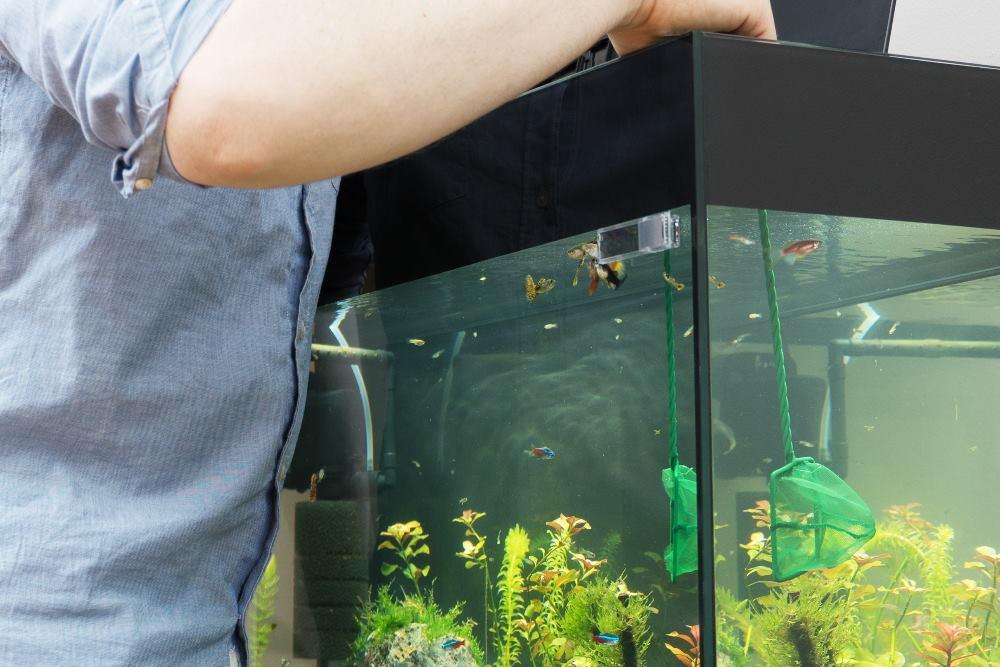captura de peces de acuario