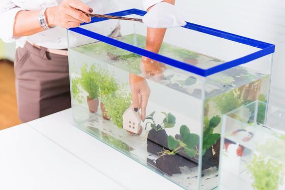 Cómo iniciar un acuario