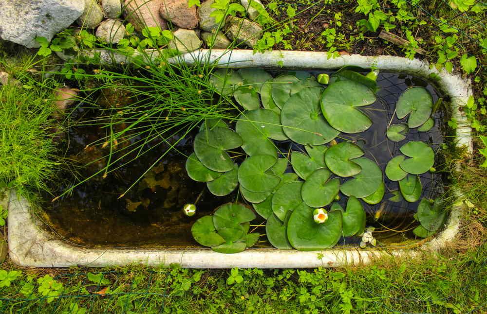 mini estanque enterrado