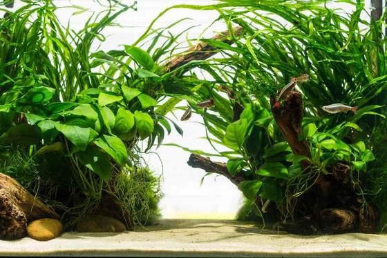 Las 10 mejores plantas de acuario fáciles para principiantes