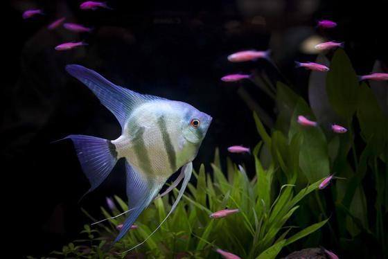 10 mejores peces de acuario para principiantes