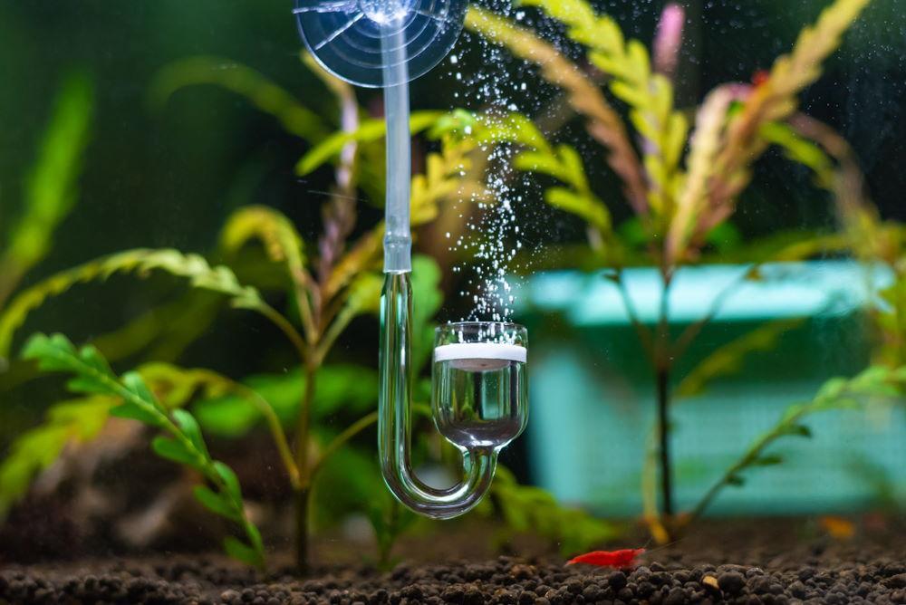 inyección de CO2 presurizado en acuario plantado