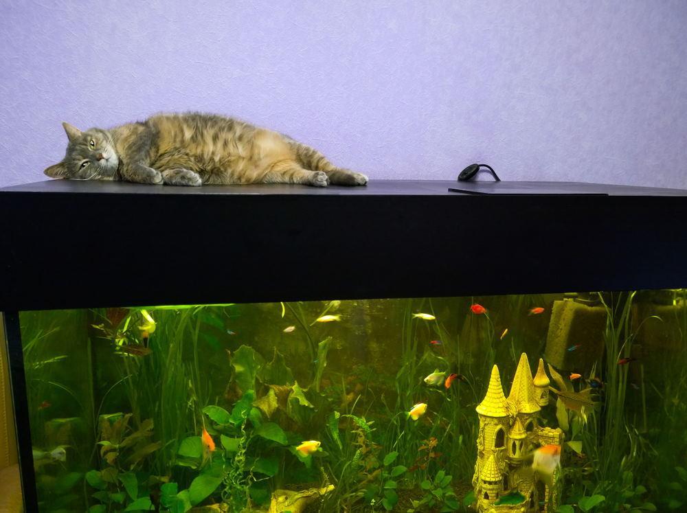 gato en acuario
