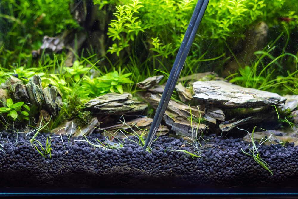 pinzas para plantar plantas de acuario