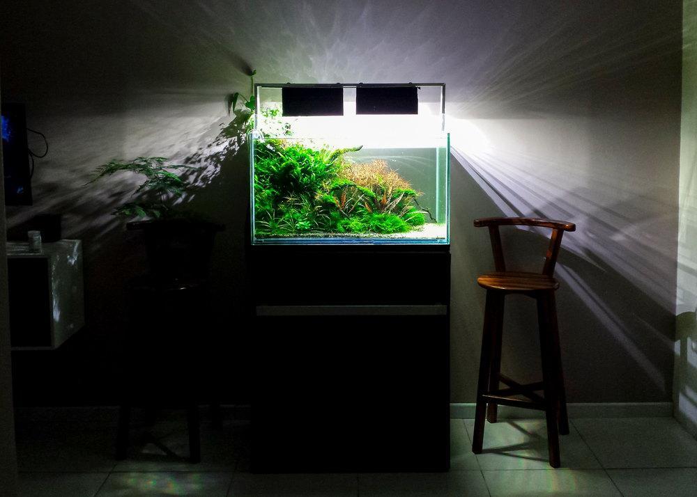 acuario plantado en un soporte