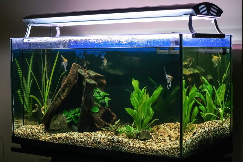 acuario plantado para principiantes