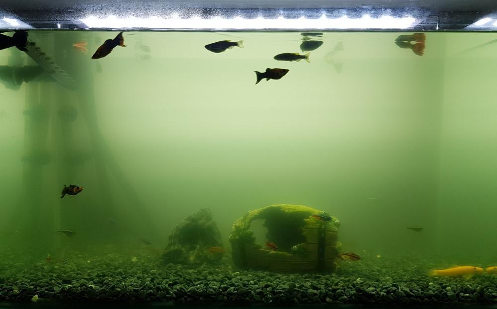 acuario de agua verde