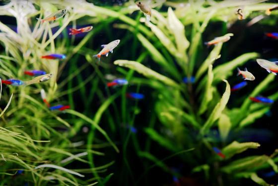 5 mejores ideas de peceras para un acuario de 20 galones