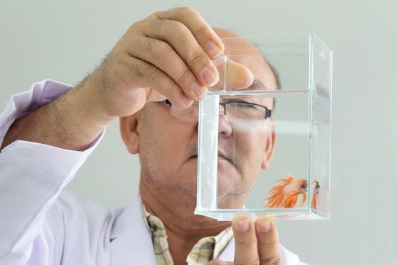 Cómo tratar a los peces de acuario enfermos (incluso si no está seguro de lo que está mal)