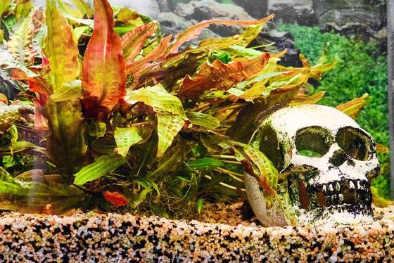 Deficiencias de nutrientes: por qué están muriendo las plantas de su acuario