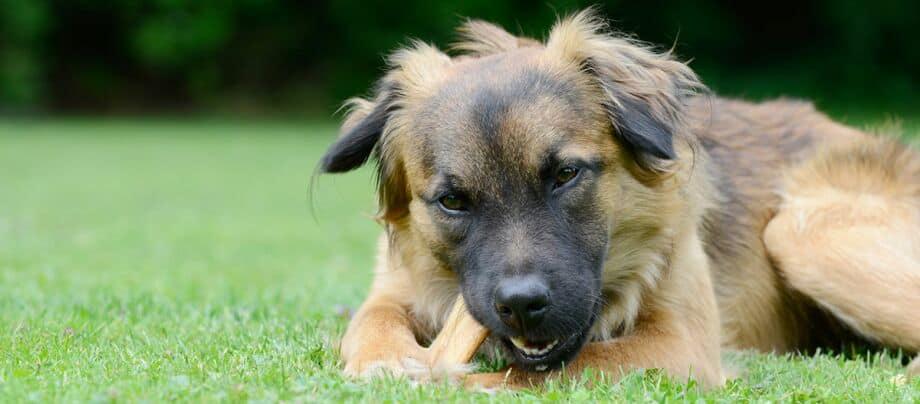 Consejos nutricionales para perros: ¡aquí tienes la cantidad correcta!
