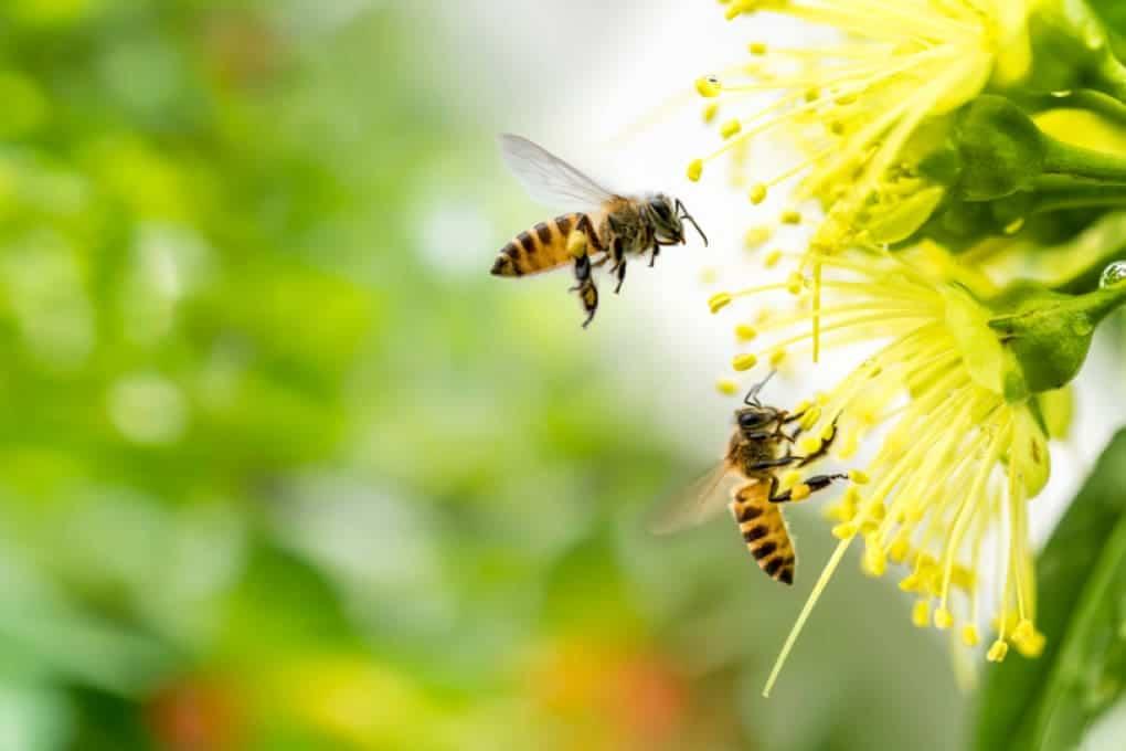 Hay casi 20.000 especies de abejas en el mundo.  Y cada uno de ellos tiene sus propias preferencias en cuanto a comida.