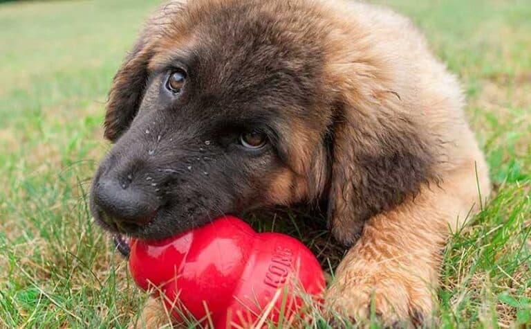 Kong para perros: El cono de plástico que se llena de recompensas