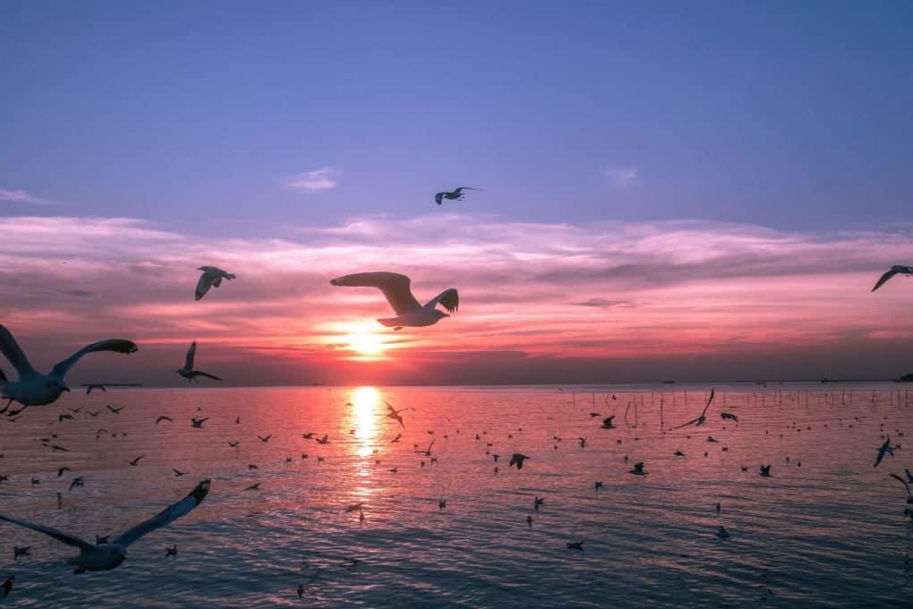 pájaros en vuelo (© jakkajee / Shutterstock)